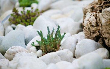 Flusskiesel Ziersteine im Steingarten