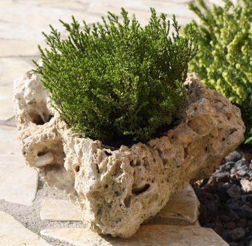 Beispiel einer Pflanzschale aus Tuffstein mit Bepflanzung