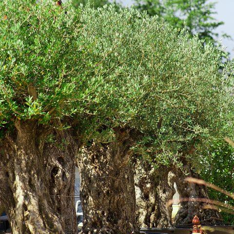 Mediterrrane Pflanzen - Kategoriebild - Naturstein Centrum LPM
